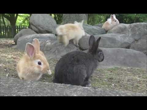 Belajar Tentang Kelinci
