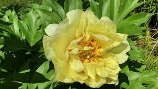 My Utah Garden Tour with plant names - Backyard