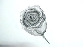 How To Draw a Rose Bud : Easy Tutorial