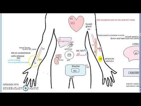 Tölgy magas vérnyomás ellen