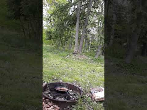 Video Of Prince Gallitzin State Park Crooked Run Campground, PA