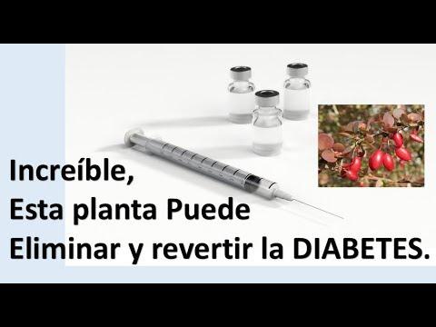 Kagocel en la diabetes tipo 2