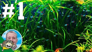 Community Fish Chat #1 - Aquarium Co-Op