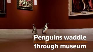 Penguins appreciate art in empty museum