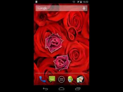 Video of Roses Live Wallpaper