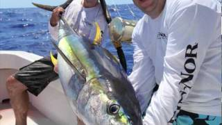 Yellowfin tuna caught on Fin-Nor Santiago