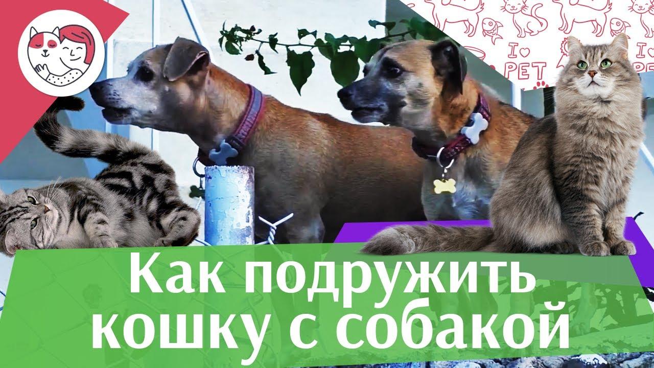 4 правила знакомства собаки и кошки, на ilikepet