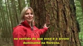 A comunicação entre as árvores
