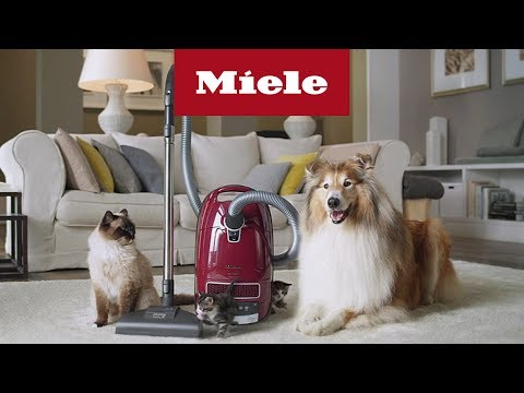 Aspiradores Cat and Dog | Miele