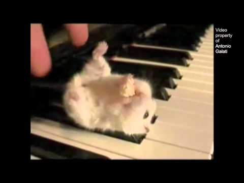 Hamster on a Piano (Song) by Parry Gripp