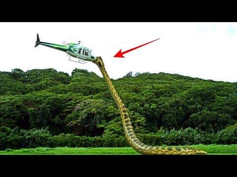 পৃথিবীর সবচেয়ে বড় ও ভয়ঙ্কর সাপ দেখুন। Largest Snake In The World.