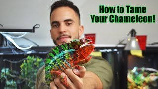 How to Handle Chameleons! (New owners WATCH THIS)