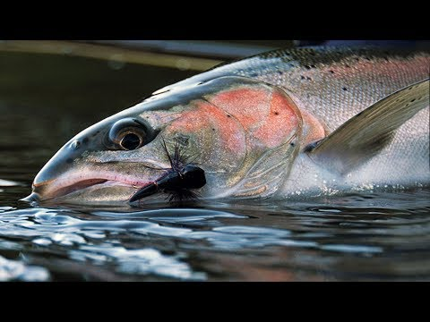 Desert Dries - Steelhead Fly Fishing by Todd Moen