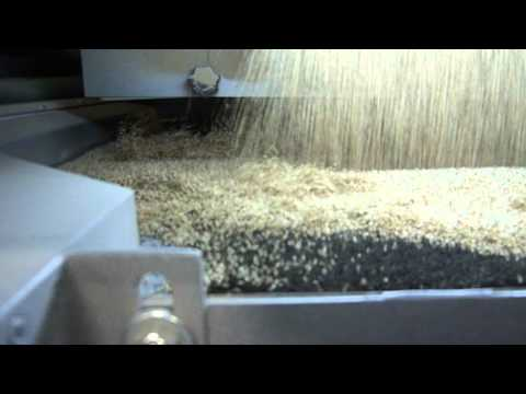 Ajwain seeds Cleaning