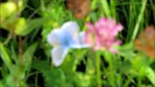 preview picture of video 'NoRa im Naturschutzgebiet'