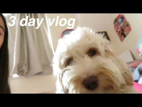 3 Day Vlog// New Years, Dog Walk & London