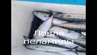 Что ловят на черном море в новороссийске
