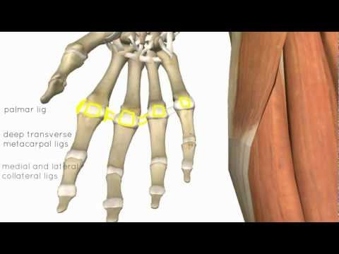 Articolazioni crampi delle mani