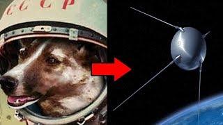 Esta perrita callejera fue rescatada y luego lanzada al espacio exterior.