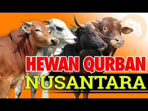 Jual Sapi Qurban dan Kambing Qurban Nusantara 2018