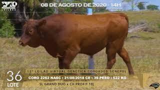 Coro 2262 b4 fiv