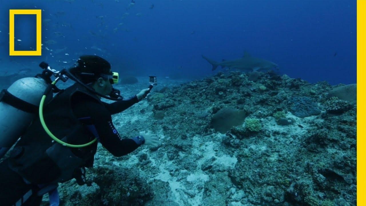 Filming Bull Sharks in Fiji | Earth LIVE thumbnail