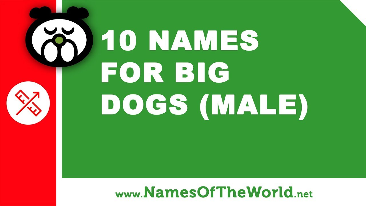 10 names for big dogs (male) -  the best pet names - www.namesoftheworld.net