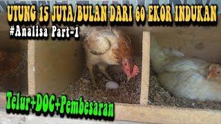 Analisa Part#1 Keuntungan Pembibitan Ayam Kampung