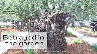 Betrayed in the garden
