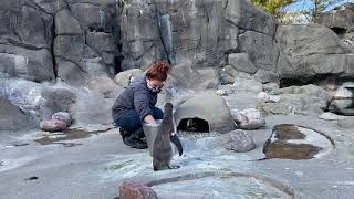 Penguin feeding at Rosamond Gifford Zoo
