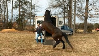 3 Steps to Teaching your Horse to Load on a Trailer