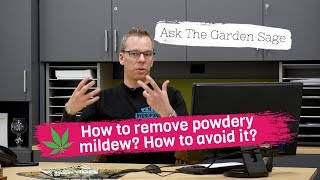 How to remove powdery mildew? - Ask the Garden Sage