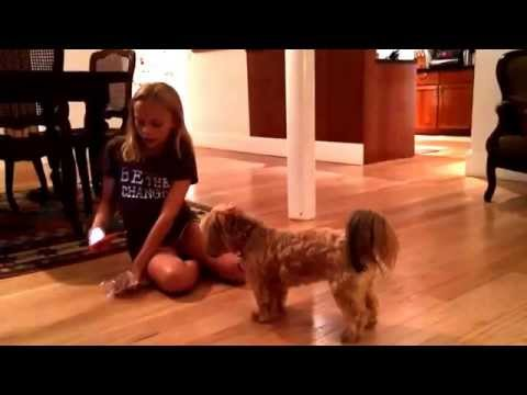 How to teach your dog to stand on their hind legs (up)