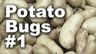 Potato Bug Beetle Invasion #1 - GardenFork #18
