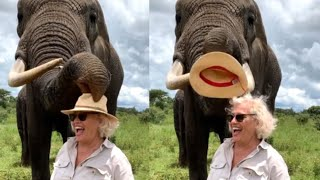 Elephant Steals Hat And Eats It