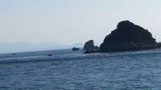 自然の幸を運ぶ保戸島の新月の大潮