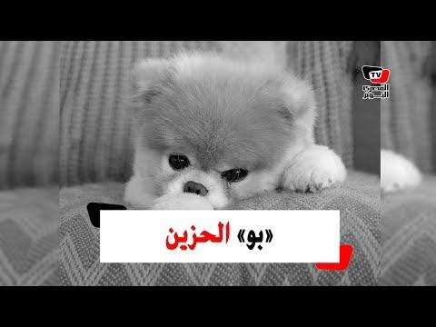 ألطف كلب في العالم يموت بالحزن!