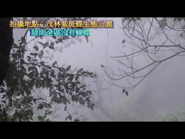 <html> <body> Film for Purple Butterfly2019-12-07 </body> </html>