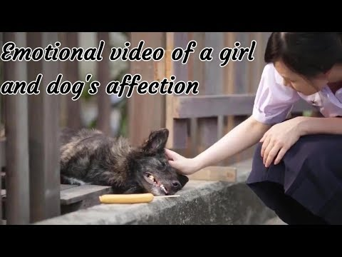 Love Story Of A Cute Girl With Her Dog's Affection-Emotional & Heart Touching-Trending Infotainment