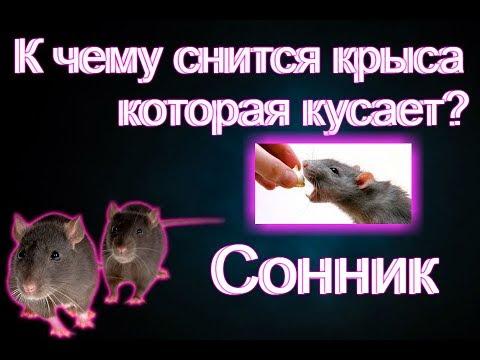 Сонник: Крыса которая укусила во сне. Толкование снов
