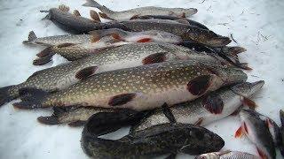 Зимняя рыбалка с Ночёвкой. За Щукой. Два дня в Тайге!