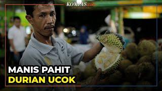 Manis Pahit Durian Ucok Medan