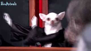 Смотреть видео. ПРИКОЛЫ С ЖИВОТНЫМИ   FUN WITH ANIMALS #33