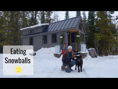 Life In A Tiny House Called Fy Nyth - Grizzly Eating Snowballs