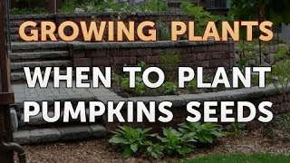 When to Plant Pumpkins Seeds