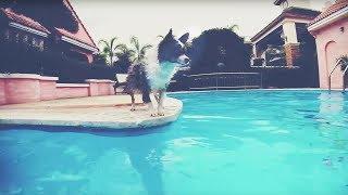 Как научить собаку плавать и приучить к воде   Чихуахуа Софи