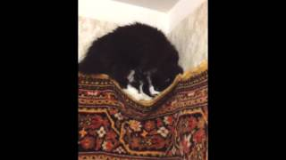 The Cat: or There and Back Again/ Подковёрный кот - Video Youtube