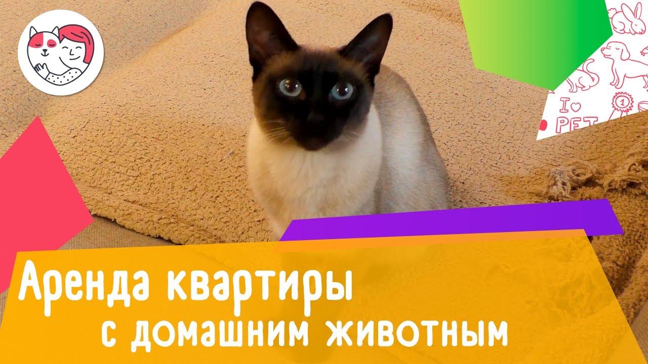 Как снять квартиру с домашним животным: 4 правила