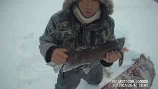 Зимняя рыбалка в якутии на ленка