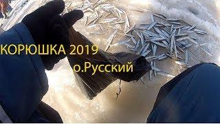 Зимняя рыбалка владивосток остров русский 2019 декабрь